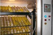 В Ульяновской области появится новый птицеводческий комплекс мощностью 70 млн инкубационных яиц
