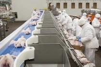 «Брянский бройлер» в прошлом году сохранил производство мяса птицы на уровне 2017 года