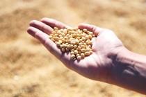 Питательная ценность сортов сои в условиях южного урала