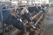 Новый молочный комплекс заложили в Северном районе Оренбургской области