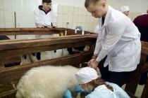 Удмуртские студенты-ветеринары представят страну на WorldSkills Russia-2019
