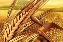 Ситуация на рынке зерна с 1 по 5 июля 2019 года