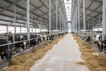 В Ялуторовском районе открыта крупная молочно-товарная ферма