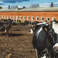 Запланировано предоставление субсидий на строительство фидлотов и мясных ферм в Башкирии