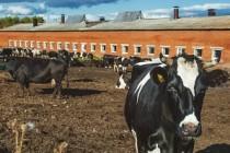 Минсельхоз определил самые продуктивные молочные фермы в Челябинской области