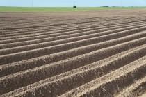 В Удмуртии продолжается сев кукурузы и рапса