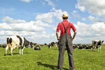 В августе МФЦ Пермского края примут заявки от сельхозпроизводителей на получение субсидий
