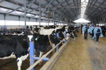 В Удмуртии откроется более 30 новых молочных комплексов