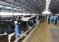 В Башкирии заработала новая молочная ферма на 2000 голов КРС