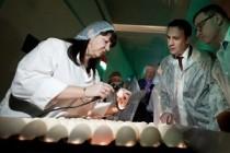 Агрохолдинг «Равис» показал федеральному министру «Сосновскую птицефабрику»