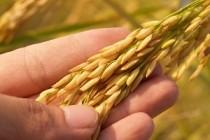 Ситуация на рынке зерна с 23 по 27 сентября 2019 года