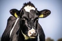 Пермские МФЦ начали приём заявок от сельхозпроизводителей на получение субсидий