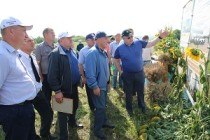 Для поддержки фермеров в Свердловской области создан Центр компетенций