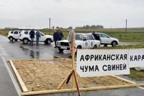В Благовещенском районе уничтожено поголовье свиней из-за АЧС, эпизоотическая ситуация в РФ на 18 мая 2020 года