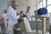 Валовый надой молока на предприятиях Кировской области увеличился на 10 процентов