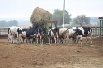 В хозяйствах Оренбуржья идет подготовка к зимне-стойловому содержанию