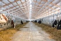 Приём документов на выплату субсидий на развитие специализированного мясного скотоводства в Челябинской области