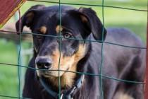 Минсельхоз Челябинской области будет осуществлять ветеринарный надзор за работой приютов для животных