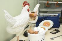В университете Северного Зауралья открыли класс по птицеводству