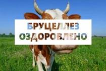 Снятие карантина по бруцеллезу КРС и эпизоотическая ситуация по бруцеллезу в Оренбургской области