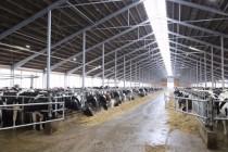 ГК «Эконива» открыла животноводческий комплекс «Шацк» на 6 тысяч голов КРС с площадкой для выращивания молодняка КРС на 7800 голов
