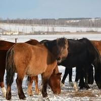 Поддержка коневодства в Башкортостане