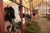 В Прикамье на получение гранта «Агростартап» претендуют 99 фермеров