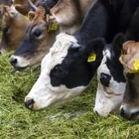 Удмуртия запустила генетический проект в животноводстве – формируется референтная база данных