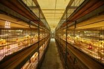 Птицеводческая Агрофирма «Линда» расширяет производство в Белебеевском районе Башкирии