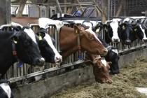 Хозяйства-лидеры по валовому производству молока и продуктивности коров Башкирии за 11 месяцев текущего года