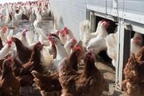 В 2020 году по просьбе аграриев в Татарстане приняты программы по капремонту птицеферм и конеферм