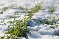 Аграрии Челябинской области готовятся к работе в условиях паводка