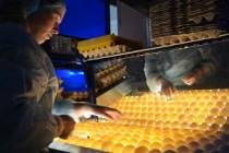 С начала года в Кировской области произвели около 140 млн яиц