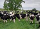 В МФЦ Прикамья стартует прием заявок от сельхозтоваропроизводителей на получение субсидий