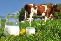 В Башкирии определили лучшие молочные хозяйства по продуктивности