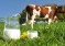 Ситуация на рынке молока и молокопродуктов  с 3 по 7 августа 2020 года