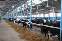 На поддержку фермерского сектора Удмуртии в условиях пандемии, дополнительно выделили 155 млн рублей