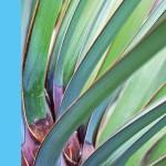 plant aflorin-pl-foto-300