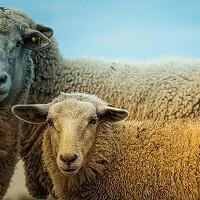 Отбор сельхозпроизводителей для получения субсидии из облбюджета наприобретение неплеменных сельскохозяйственных животных в Курганской области