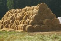 В Удмуртии проанализировано 248 проб кормов собственного производства – качественные показатели превышают прошлогодние значения