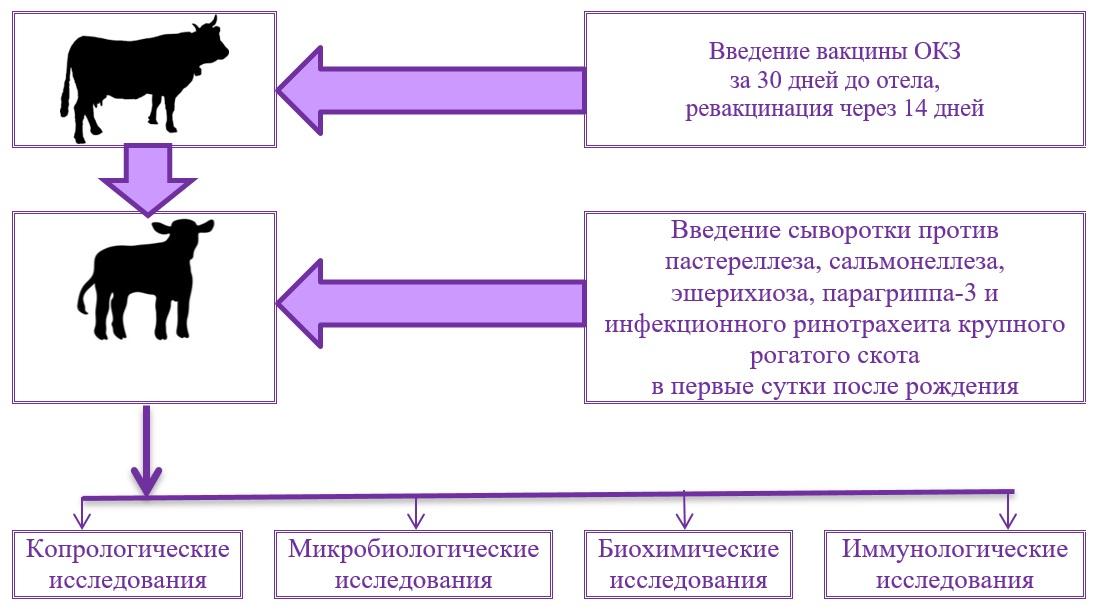 telyata-molozivo- 55255