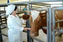 С 7 по 11 июня в Татарстане пройдёт 2-й Всероссийский конкурс зоотехников-селекционеров молочного и мясного скотоводства