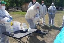 В Челябинской области прошли учения по борьбе с птичьим гриппом