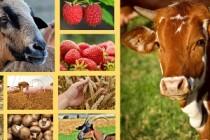 Минсельхозпрод Татарстана объявляет о начале приема заявок на участие в конкурсном отборе на получение гранта «Агростартап»