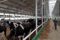 Модернизации животноводческих помещений завершили в СХПК «Коелгинское» в Челябинской области