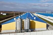 Компания «Сибагро» купила свинокомплекс в Курской области
