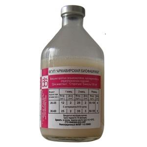 pps-vaccine-armavir-foto