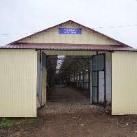 Новый животноводческий объект, телятник на 300 голов, заработал в Алнашском районе Удмуртии